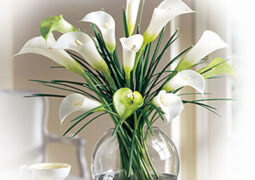 calla_lily_flower